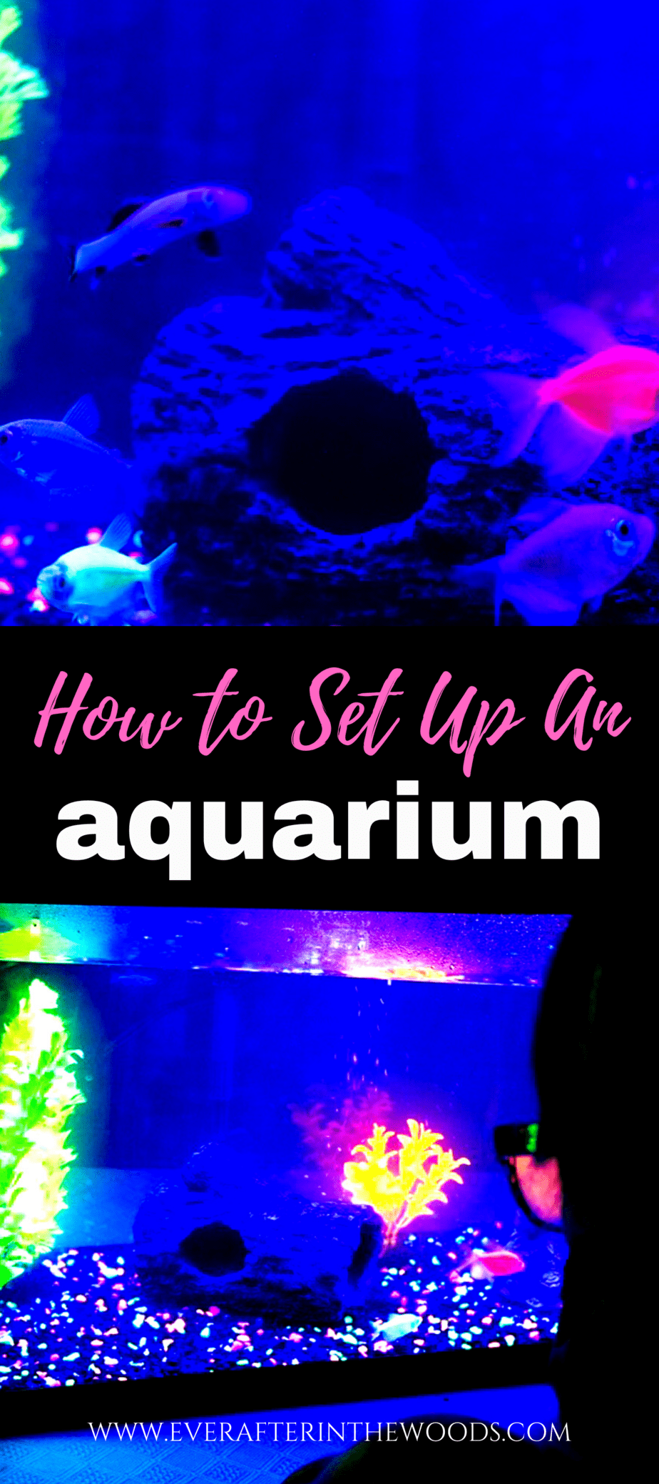 Beginners Guide to Setting Up your first Aquarium