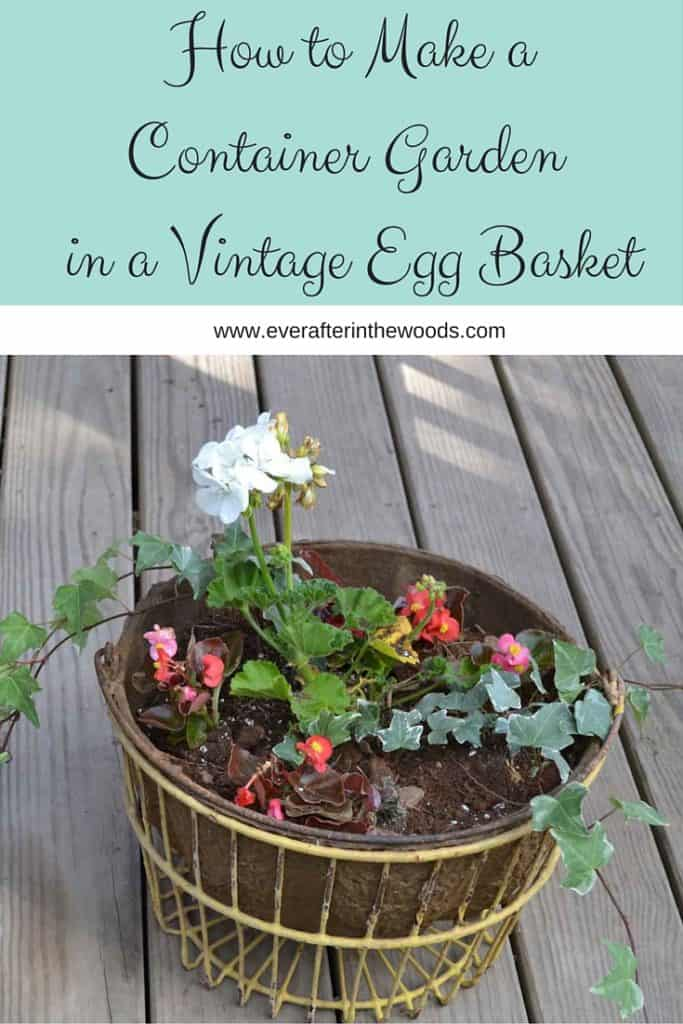 How to Make aContainer Garden in a Vintage Egg Basket