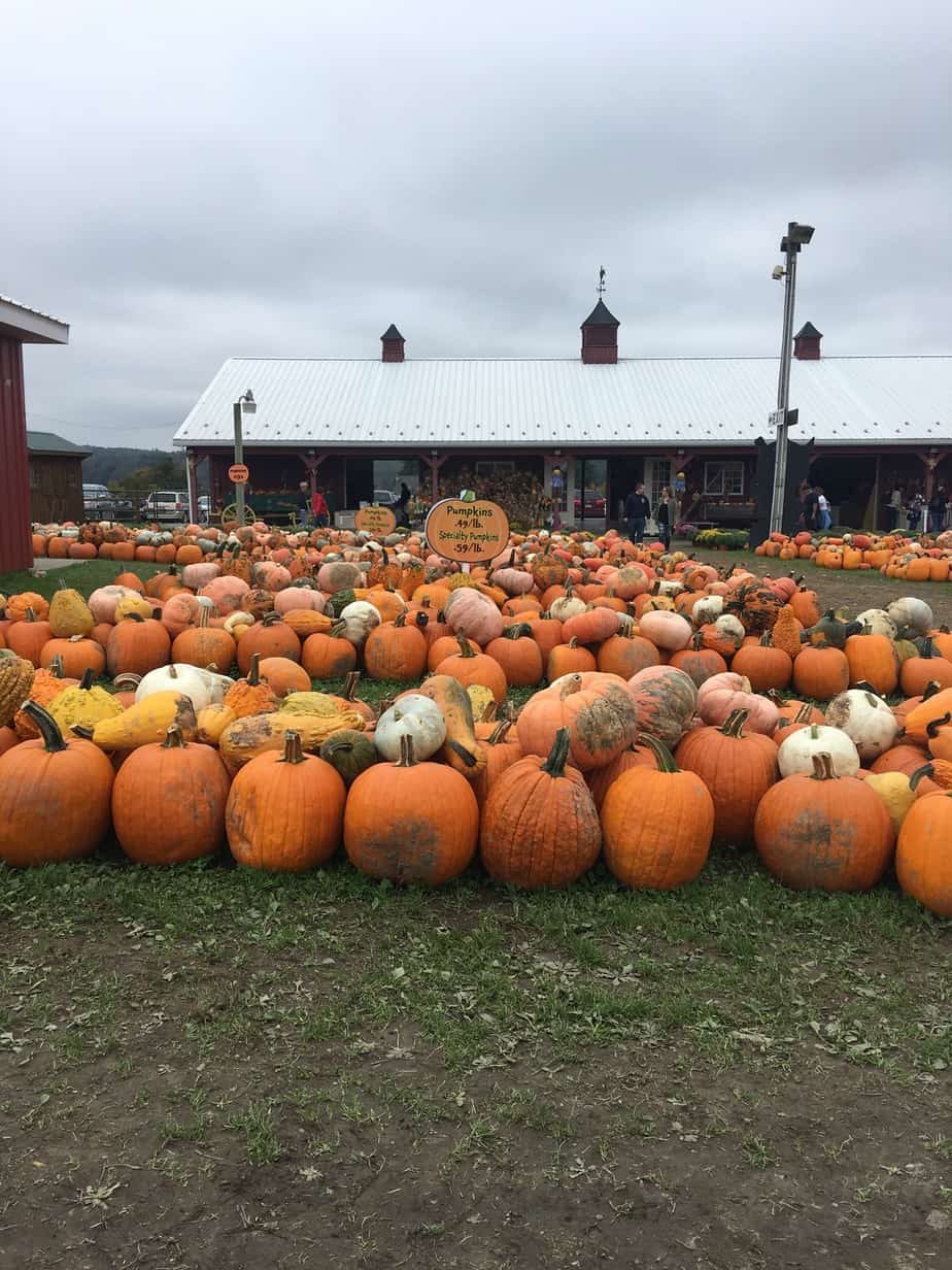 pumpkins in pa