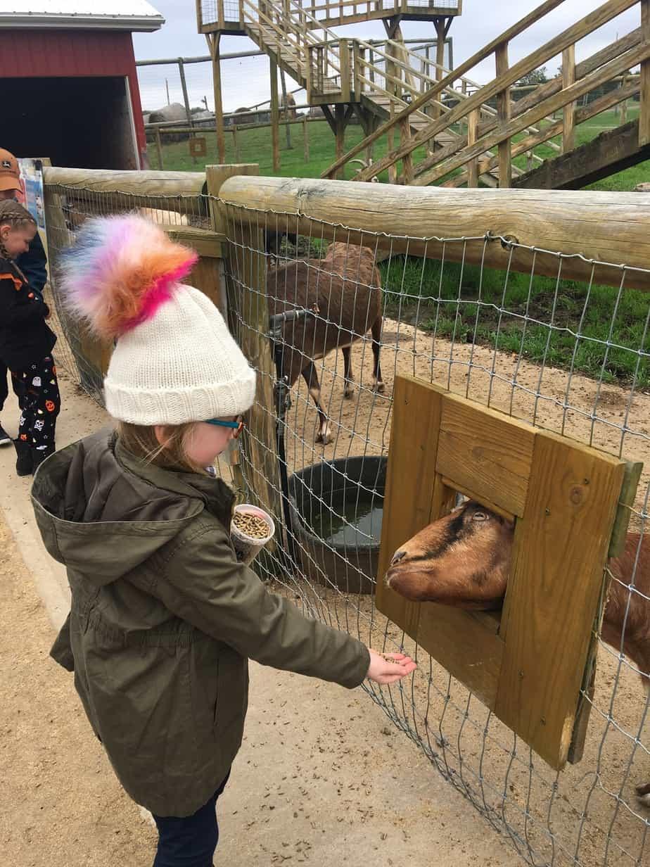 petting zoo pa