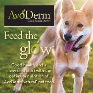 healthy pet, natural pet, natural dog food, pet itch relief, dog itch relief, good health shows, AvoDerm Natural dog foods, avocados are good for dogs,