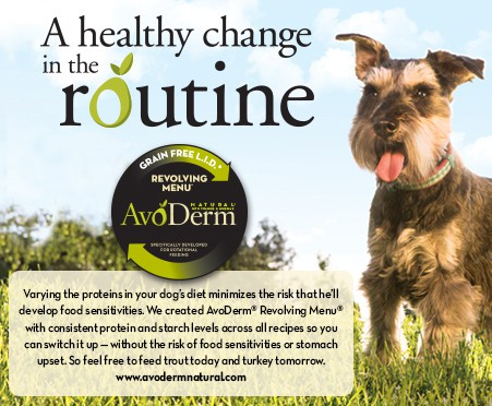 healthy skin and coat, avocado for healthy dog, dog allergies, dog allergy relief, pet allergy relief, dog digestion, how to improve pet digestion