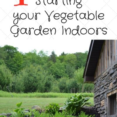 4 Tips for Starting Your Vegetable Plants Indoors