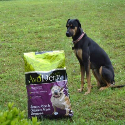 AvoDerm® Pet Food for a Healthy & Happy Pet