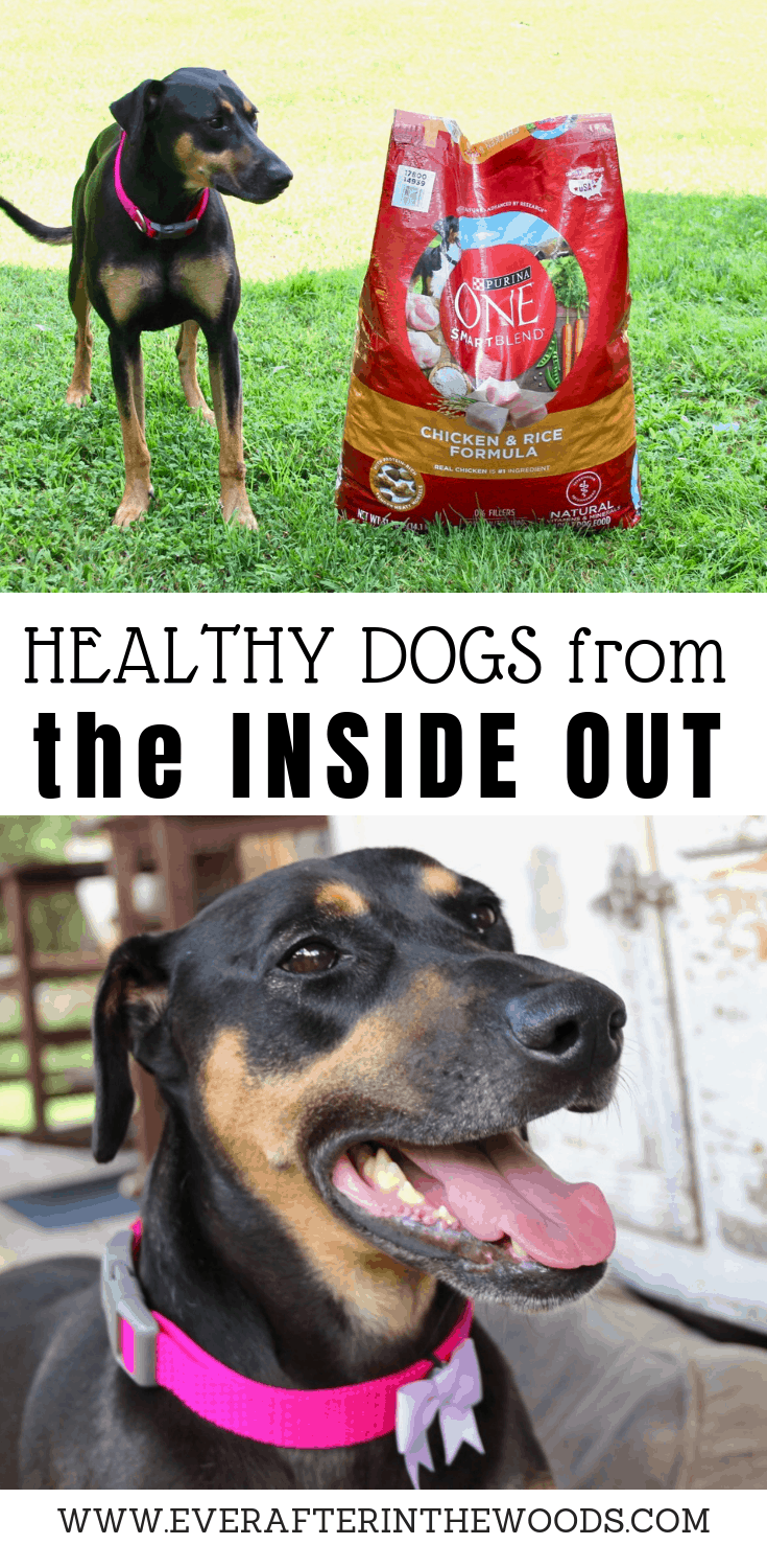 make healthy choices for your dogs