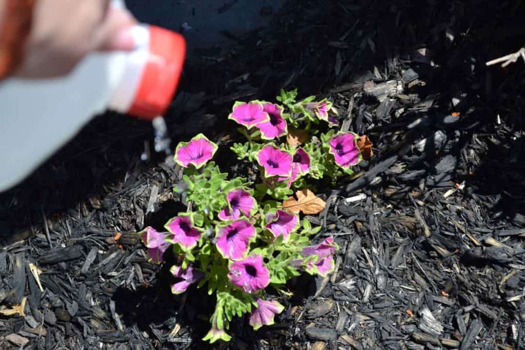 diy-watering-can-from-milk-jug-for-kids-diy
