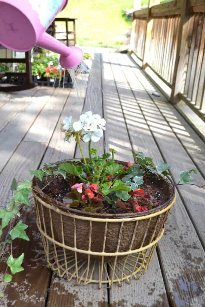 stok-coffee-iced-vintage-egg-basket-containergarden-summer